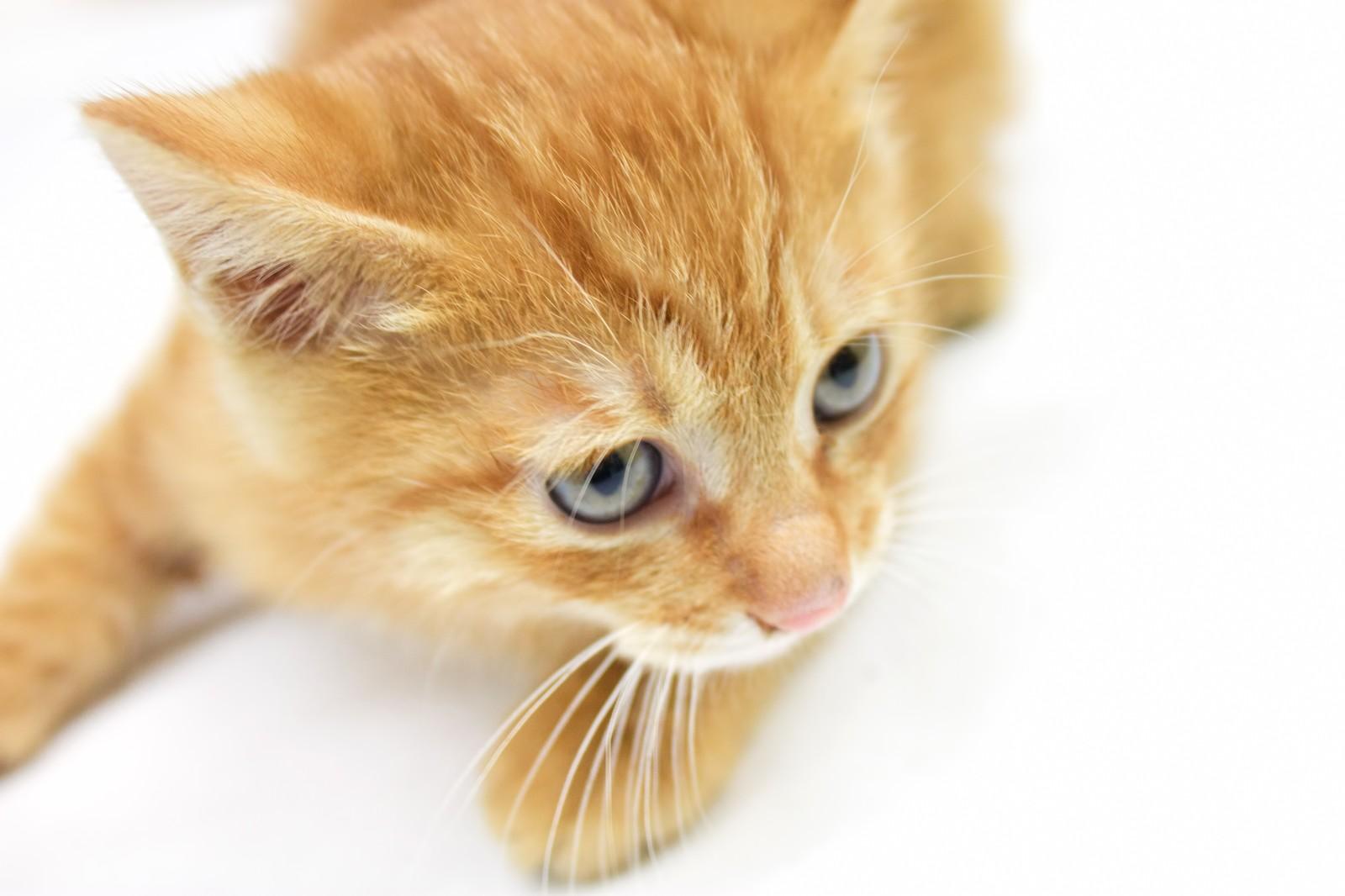 空前の猫ブーム!猫の多頭飼育崩壊はなぜ起こるのか?