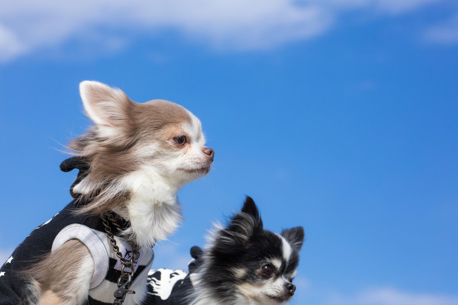 家族でチャレンジ!「犬の飼い主検定」愛犬と楽しく暮らそう