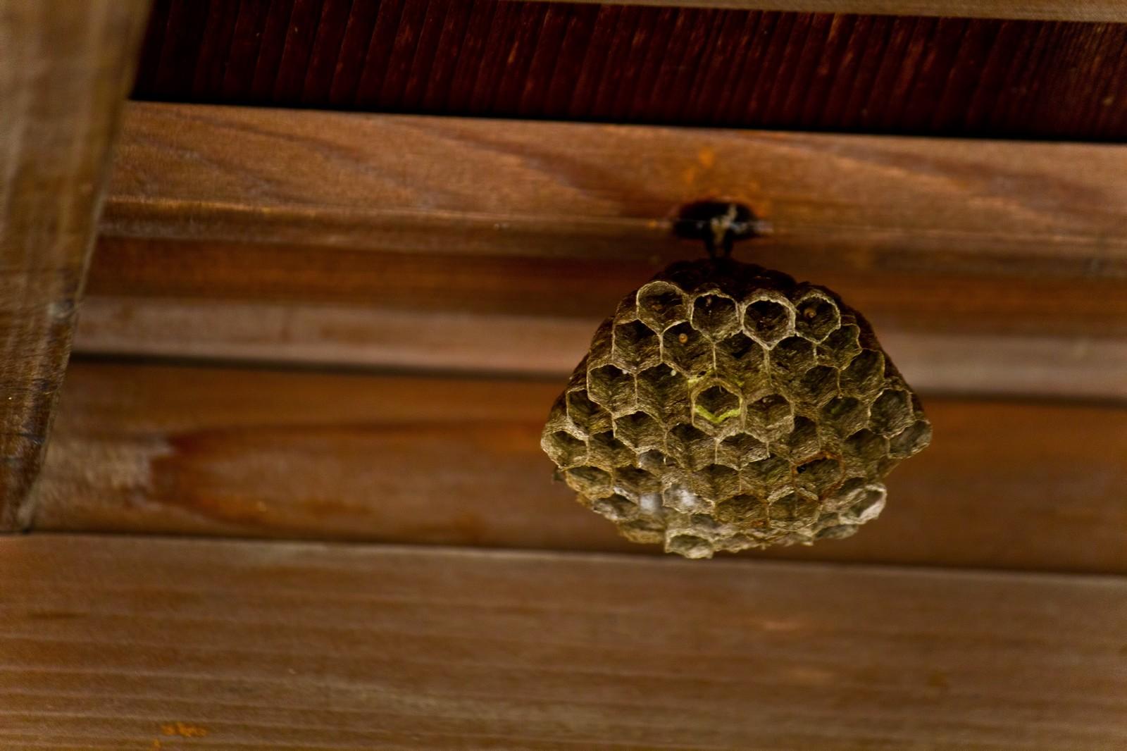 夏はスズメバチに注意!住宅に巣を作らせないためには