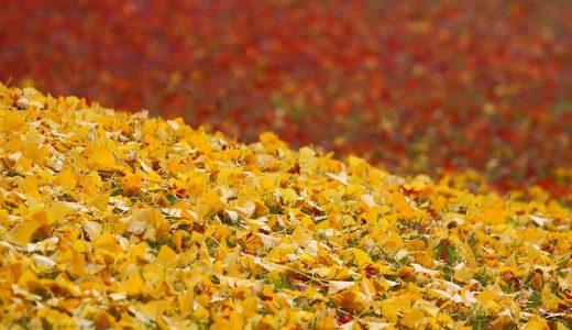 小石川後楽園の紅葉は無料なのか?見ごろやアクセスの方法の紹介